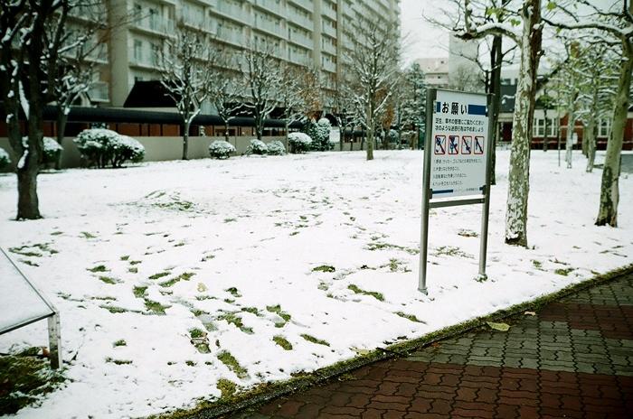 冬のプラタナスと芝生の足跡_c0182775_17253952.jpg