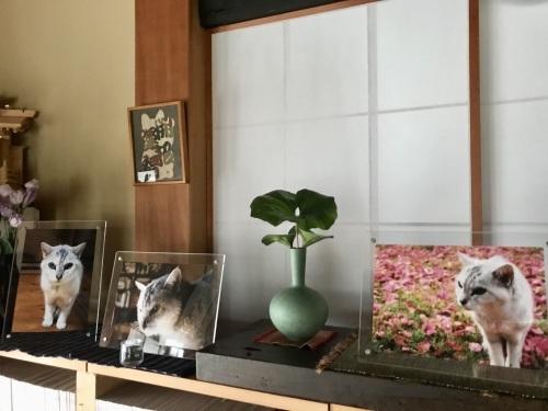玖磨散歩&モンちゃんコーナー_f0054677_06100532.jpeg