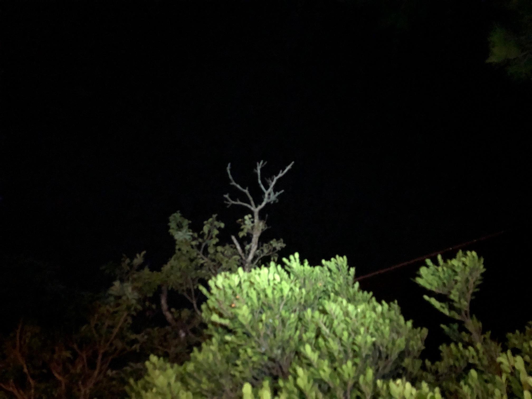星空キャンプ〔2日目〕今夜のメニューは「てづくりぎょう座」お腹いっぱいになって、一瞬だけど月も見えた!_d0363878_23031127.jpg