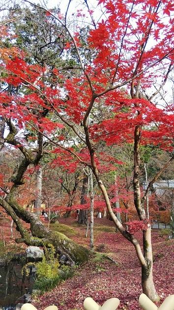 散紅葉もいいね_d0043390_23515361.jpg