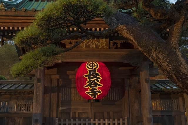 鎌倉 長谷寺の紅葉ライトアップ2019_b0145398_18473942.jpg