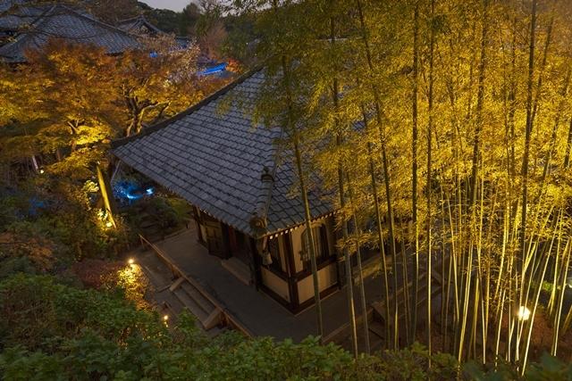 鎌倉 長谷寺の紅葉ライトアップ2019_b0145398_18480387.jpg