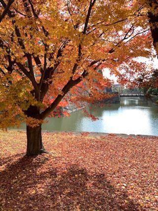 京都の紅葉の写真&今日の晩御飯_c0090198_13282007.jpg