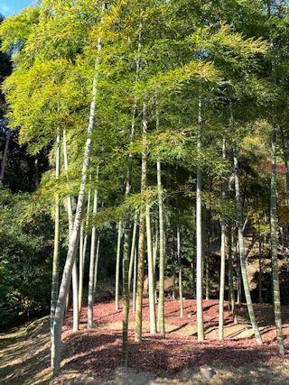 京都の紅葉の写真&今日の晩御飯_c0090198_13284104.jpg