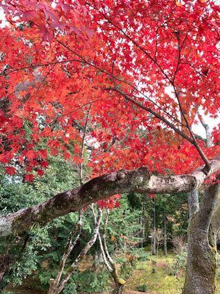 京都の紅葉の写真&今日の晩御飯_c0090198_13312620.jpg