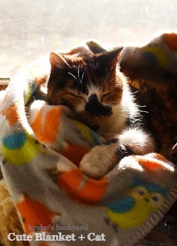 かわいい毛布+猫又_b0253205_11045565.jpg