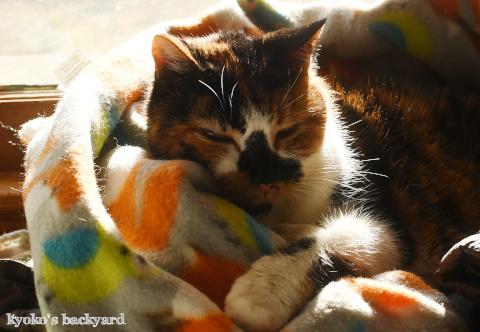 かわいい毛布+猫又_b0253205_11051244.jpg