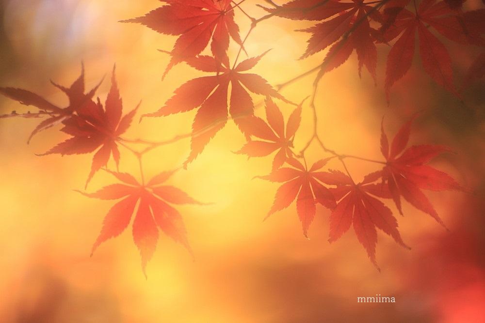 秋彩_f0131611_19380829.jpg