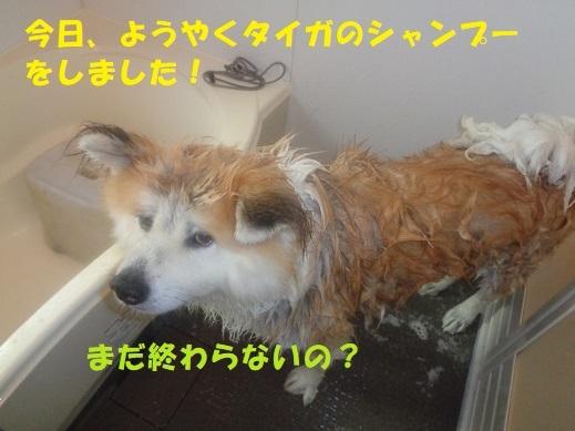 f0121712_23480148.jpg