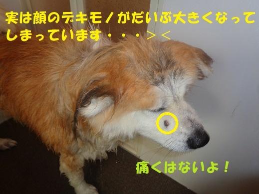 f0121712_23480946.jpg