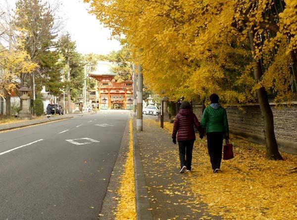 龍翔寺とくすのき落葉_e0048413_16184507.jpg