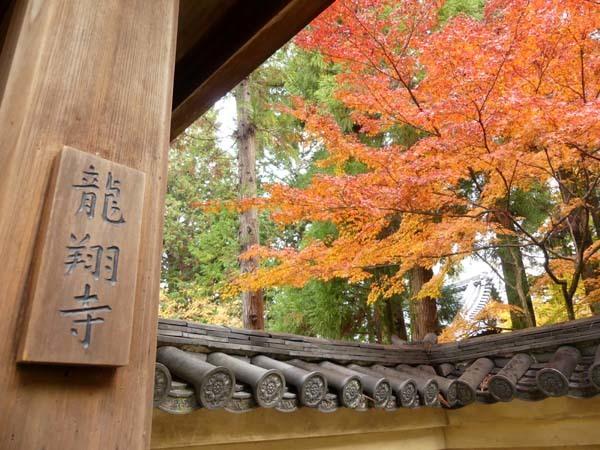 龍翔寺とくすのき落葉_e0048413_16184803.jpg