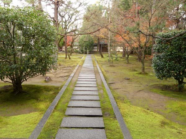 龍翔寺とくすのき落葉_e0048413_16185123.jpg