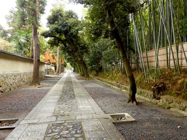 龍翔寺とくすのき落葉_e0048413_16190146.jpg