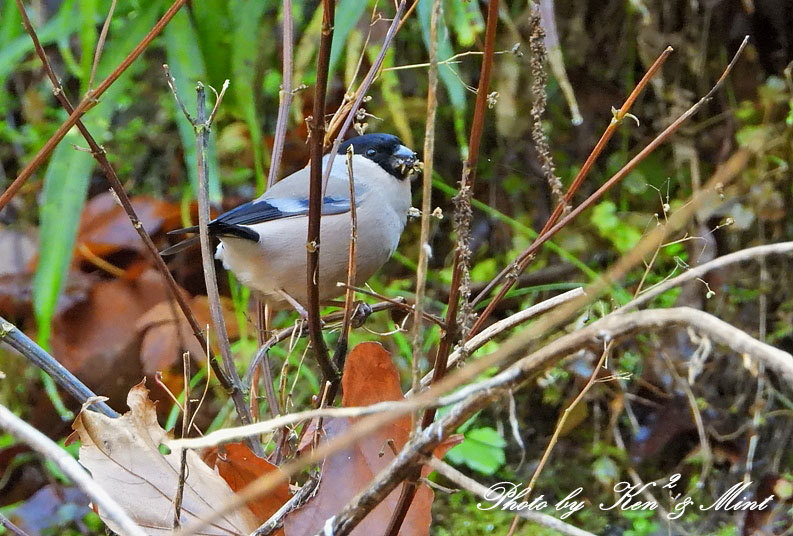 林道に冬鳥さん入って来ました~Σ^) byケンケン_e0218518_21064963.jpg