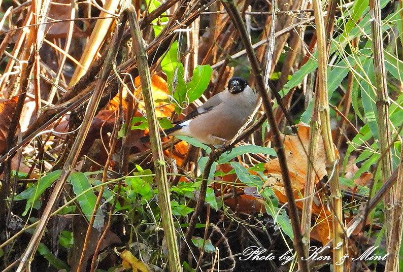 林道に冬鳥さん入って来ました~Σ^) byケンケン_e0218518_21070805.jpg