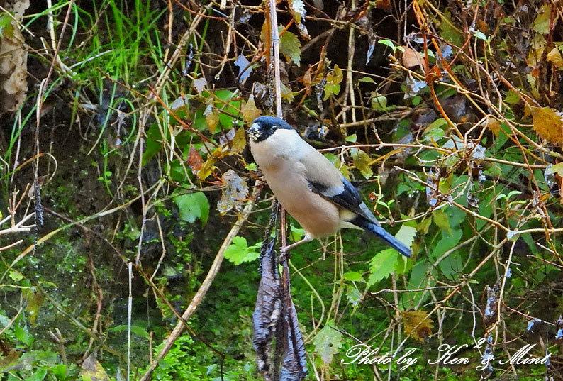 林道に冬鳥さん入って来ました~Σ^) byケンケン_e0218518_21072778.jpg