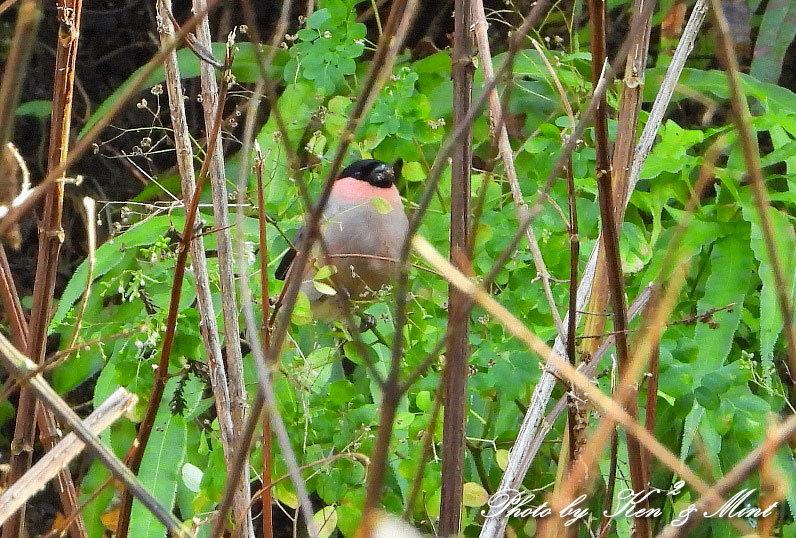 林道に冬鳥さん入って来ました~Σ^) byケンケン_e0218518_21074568.jpg