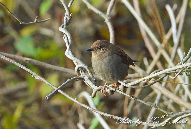 林道に冬鳥さん入って来ました~Σ^) byケンケン_e0218518_21111472.jpg
