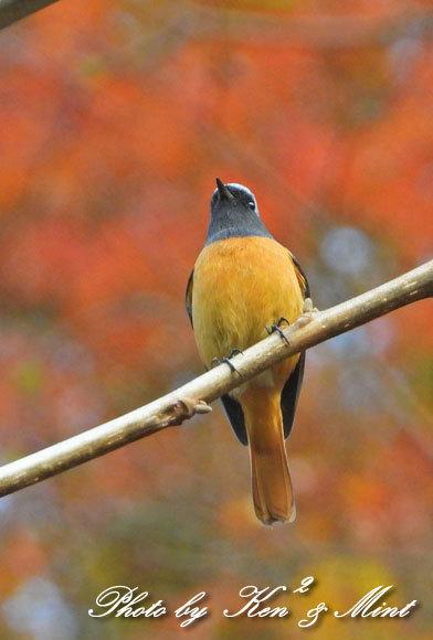 林道に冬鳥さん入って来ました~Σ^) byケンケン_e0218518_21155849.jpg