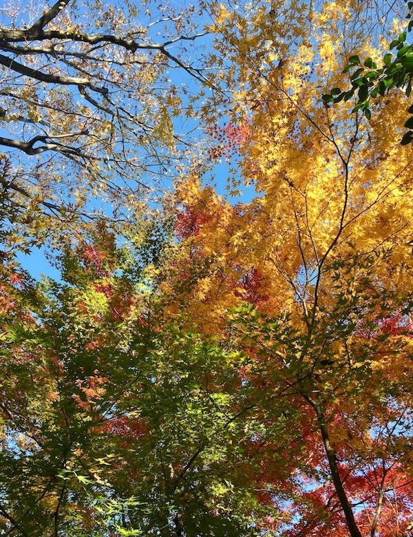 近所の植物園散歩_b0038919_19523270.jpg