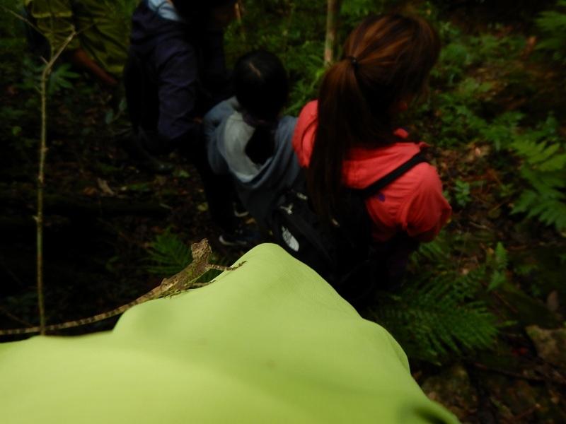 2019年度 第6回 くんじゃん山学校 秋の森で見つけよう!_f0121321_17582768.jpg