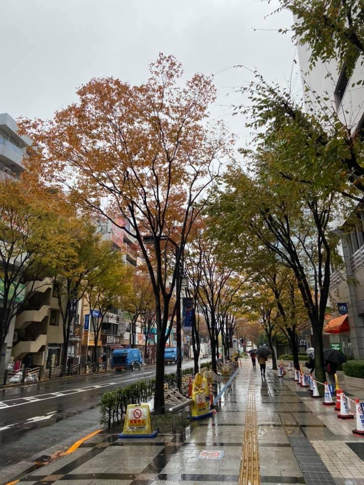 11月回去東京祭拜婆婆_f0057324_14502977.jpg
