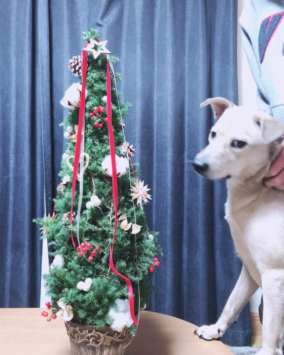 ゆったりとクリスマスツリーのレッスン_f0155431_20512114.jpg