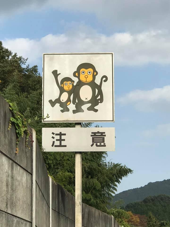 /// 中国縦貫道上り線で4匹目新種のさる 23匹目 /// _f0112434_16281070.jpg