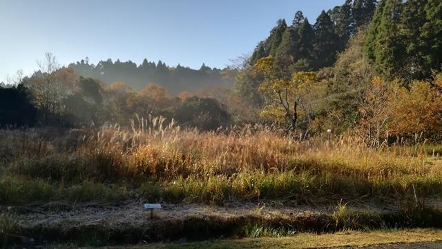今日は寒い朝でした_a0123836_13370364.jpg