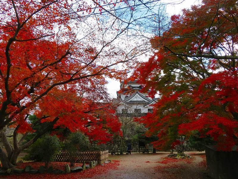 彦根城の紅葉20191203_e0237645_23121219.jpg