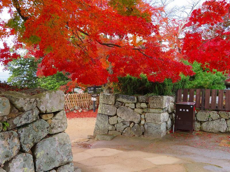 彦根城の紅葉20191203_e0237645_23121342.jpg