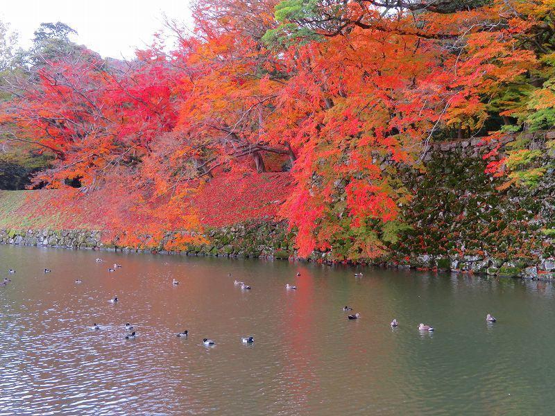 彦根城の紅葉20191203_e0237645_23121358.jpg