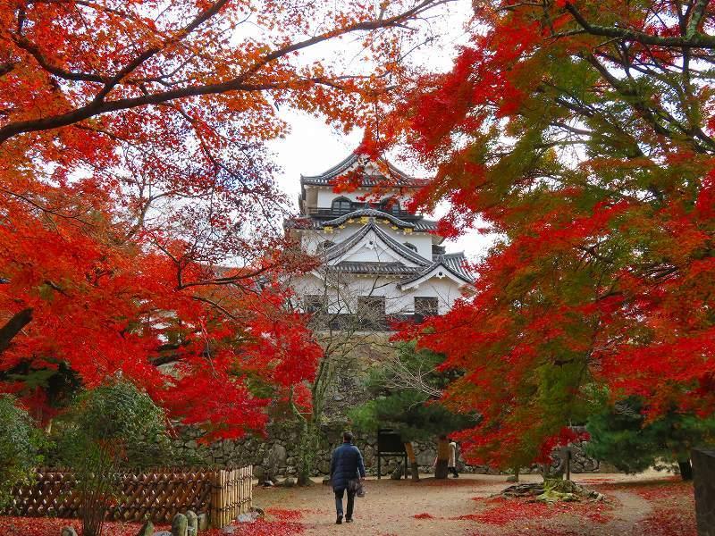 彦根城の紅葉20191203_e0237645_23121416.jpg