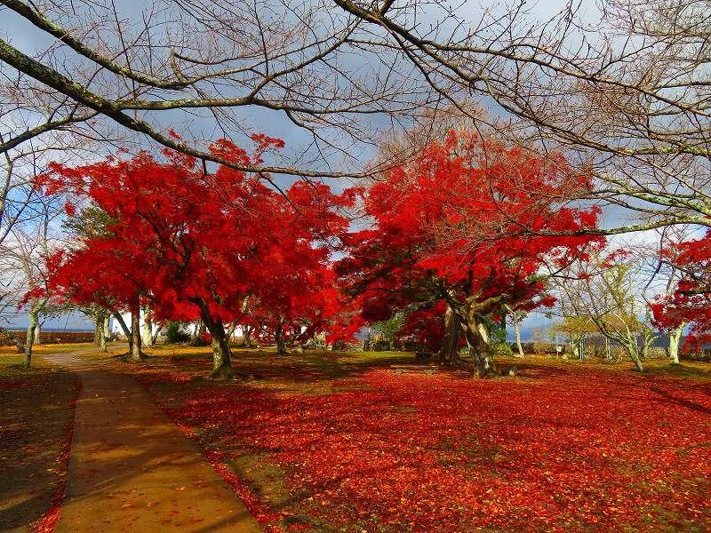彦根城の紅葉20191203_e0237645_23131375.jpg