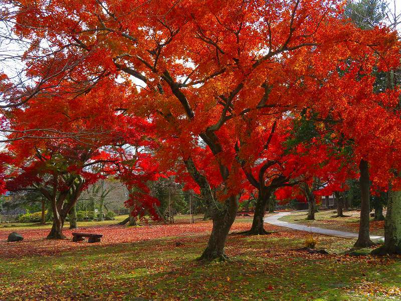 彦根城の紅葉20191203_e0237645_23131504.jpg