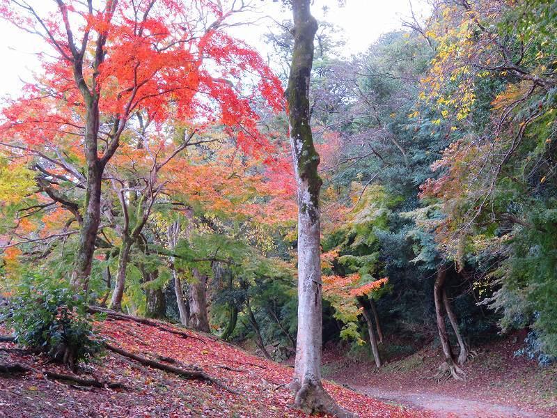 彦根城の紅葉20191203_e0237645_23131628.jpg