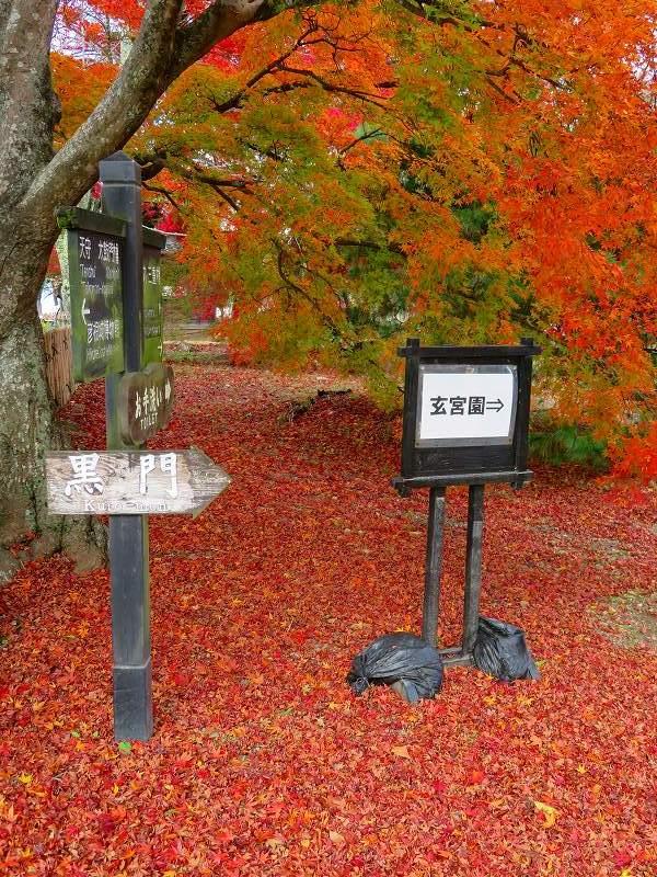 彦根城の紅葉20191203_e0237645_23131818.jpg