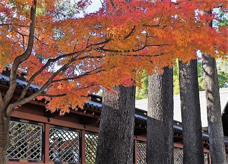根津神社へ ☆_d0146247_14452279.jpg