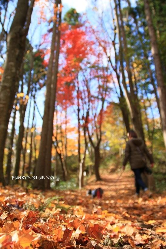 元気に歩こう♪ と、フワフワサララ~~~_c0145250_10343550.jpg