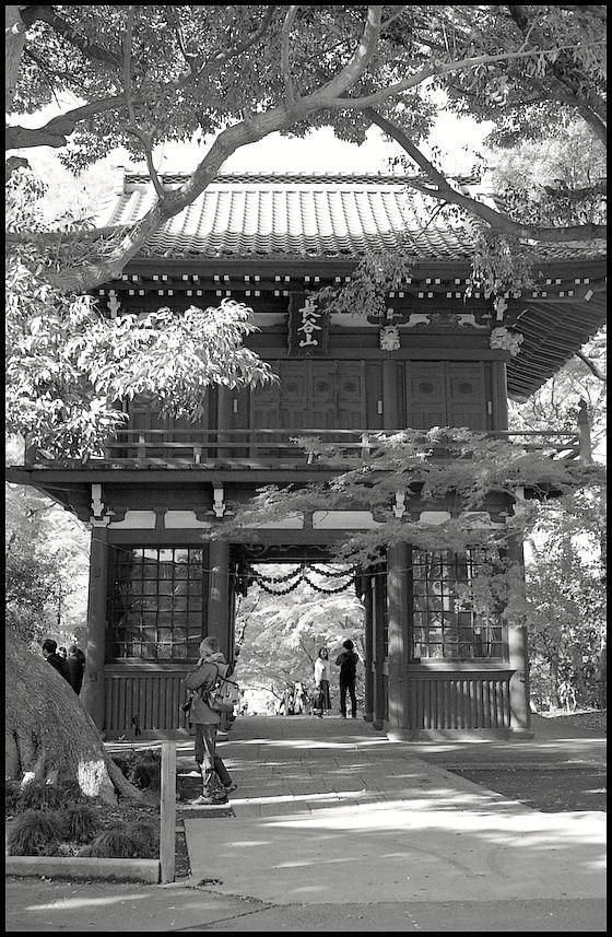 本土寺 -12_b0340572_10383002.jpg