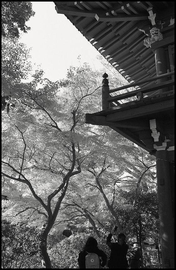 本土寺 -12_b0340572_10383514.jpg