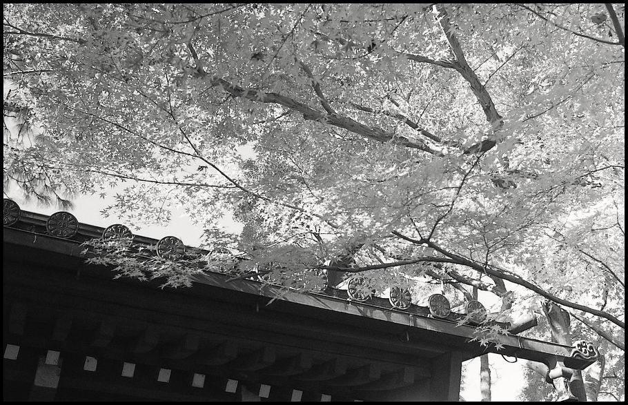 本土寺 -12_b0340572_10384269.jpg