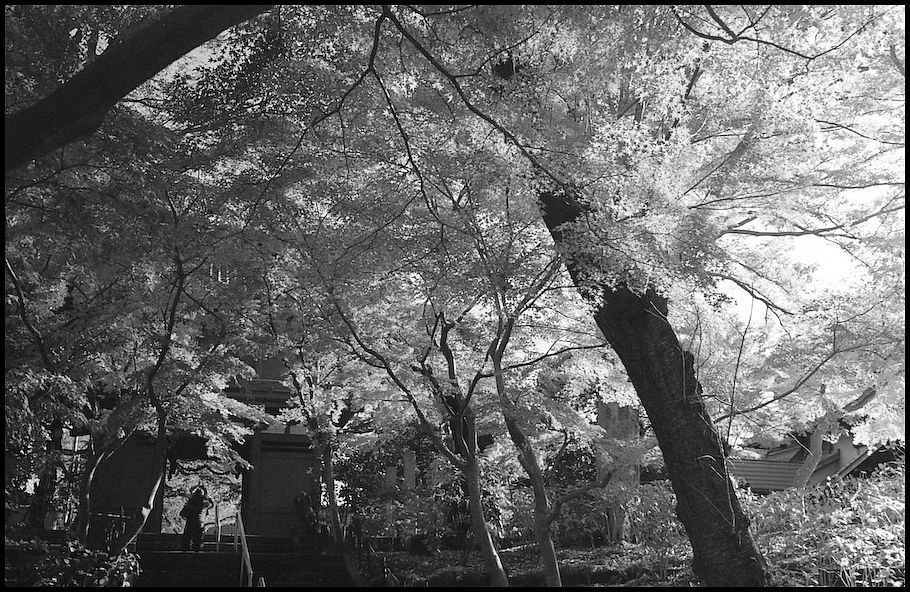本土寺 -12_b0340572_10384651.jpg