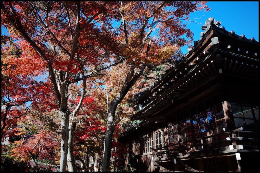 本土寺 -13_b0340572_22145513.jpg