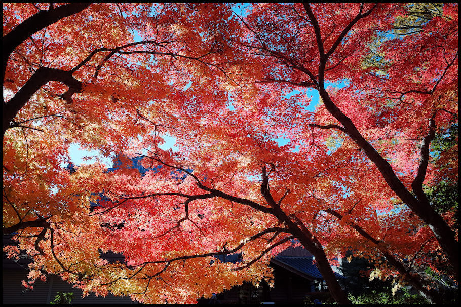 本土寺 -13_b0340572_22150507.jpg