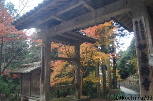 今年最後の紅葉~吉野山_e0181373_21425255.jpg