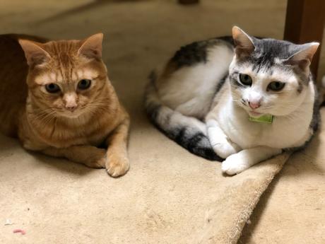 猫長女と猫次女_e0355177_14492736.jpg