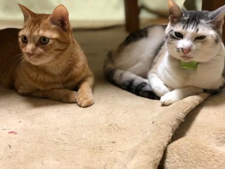 猫長女と猫次女_e0355177_14493057.jpg