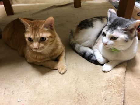 猫長女と猫次女_e0355177_14493244.jpg